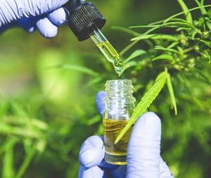 octrooien binnen de cannabismarkt
