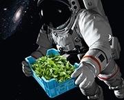 Tupperware-improves-extraterrestrial-lettuce-growing.jpg