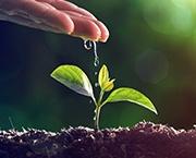 veredeling-planten.png